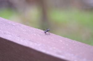 Jak se zbavit mravenců v domě
